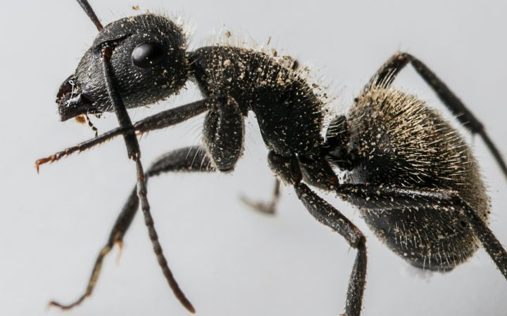 Избавляемся от муравьев: самые эффективные способы борьбы_604ef7d56d99b.jpeg