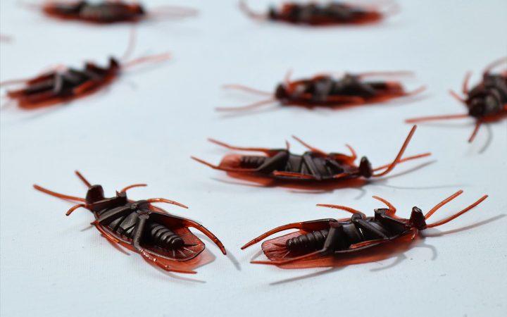 Как избавиться от тараканов: пошаговая инструкция_603b2faf01ed1.jpeg