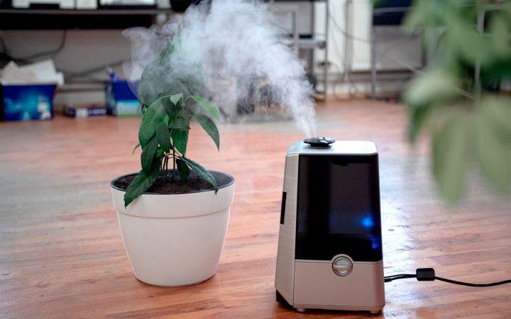 Как увлажнить воздух в квартире: 10 лайфхаков_602e0148030bd.jpeg