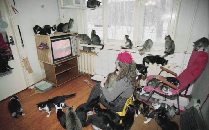 Кошкин дом: что делать, если квартира соседей стала приютом для животных_5fe83a995962b.jpeg