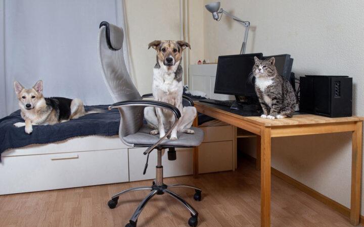 В Москве владельцам животных стало труднее арендовать жилье в пандемию_5fb4b799354b0.jpeg