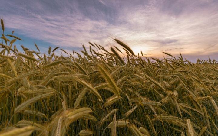 В России запретят застраивать земли под органические культуры_5faccf83655fd.jpeg